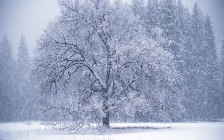 snow_falling1680x1050